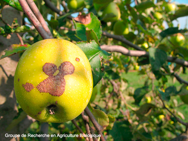 New approaches in biological control of apple scab